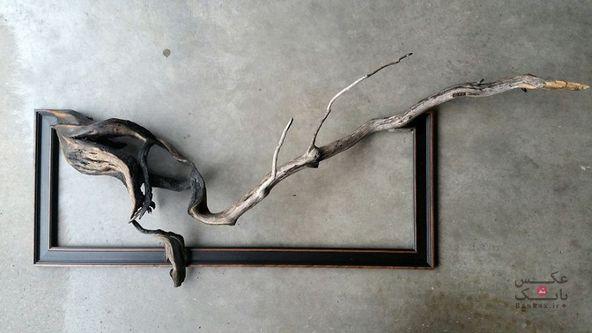 زندگی بخشیدن به درختان مرده/بانک عکس